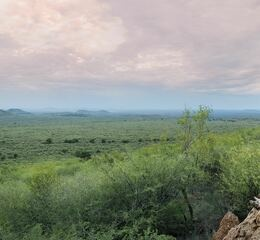 Madikwe safari lodge bush breakfast panorama